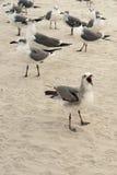 Duży Mouthed Seagull Zdjęcia Royalty Free