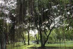duży parkowy drzewo Fotografia Royalty Free
