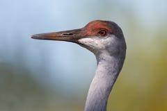 Duży ptak Fotografia Royalty Free