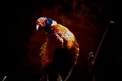 Duży ptak, Obrazy Stock