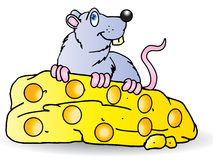 duży ser je popielatej myszy Zdjęcie Royalty Free