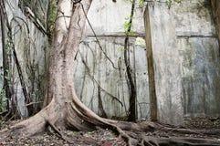 duży stary drzewo Zdjęcie Stock