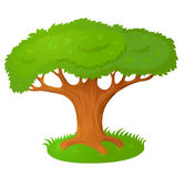 Duży Stary Drzewo Zdjęcia Stock