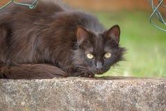 Duży stary kot Zdjęcia Stock