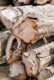 Duży stos drewno Zdjęcie Royalty Free