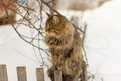 Duży szary uliczny kota obsiadanie na ogrodzeniu Fotografia Royalty Free