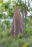 Duży termitu kopiec Fotografia Stock