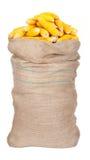 Duży worek kukurydzani cobs Fotografia Royalty Free