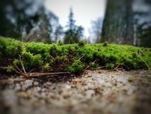 Dual aperture image of moss. Blur, nature, green stock photography