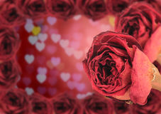 dual beautiful dry red rose with frame on blur heart bokeh Royalty Free Stock Images