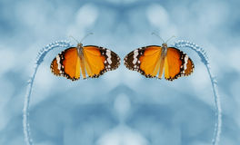 Dual butterfly and blur background. Dual butterfly are beautiful created up one layer and flip horizontal picture and low dept of field Royalty Free Stock Photo