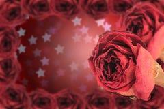 dual den torra röda rosen med ramen på suddighetsstjärnabokeh Royaltyfri Bild