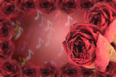 dual dry red rose with frame on blur note bokeh Royalty Free Stock Photography