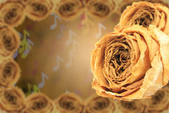 Dual dry white rose with frame on blur note bokeh Royalty Free Stock Photos