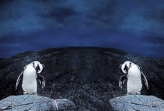 Dual Magellanic Penguins Stand on a Rock on Nature Backg stock photos