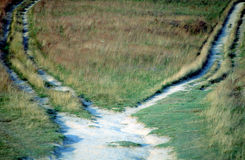 Dual Path. Footpath in field splitting into two. Which way choose : right or left Royalty Free Stock Images