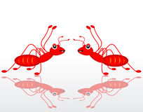 Dual red ant. On white background Stock Photos