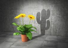 Duality concept. Metaphor of human essence. Vase with flower cast shadow in form of cactus. 3d. Illustration Royalty Free Stock Photo