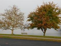 Duas árvores Fotografia de Stock Royalty Free
