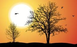 Duas árvores. Imagens de Stock Royalty Free