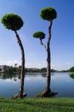Duas árvores Imagem de Stock