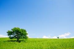 Duas árvores Foto de Stock