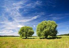 Duas árvores Fotografia de Stock