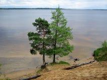 Duas árvores Fotos de Stock