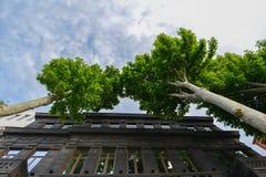 Duas árvores bonitas no parque foto de stock royalty free