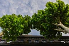 Duas árvores bonitas no parque fotografia de stock royalty free
