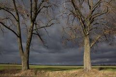 Duas árvores corajosas na frente do campo verde paisagem do verão no tempo chuvoso Fotos de Stock