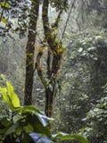 Duas árvores da selva na floresta da nuvem foto de stock