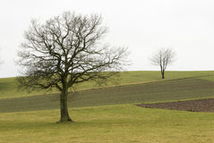 Duas árvores em um campo Imagens de Stock Royalty Free