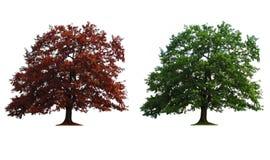 Duas árvores na linha Imagens de Stock Royalty Free