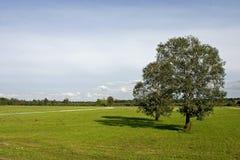 Duas árvores no prado Foto de Stock Royalty Free