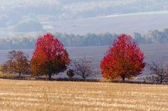 Duas árvores vermelhas brilhantes no meio do campo imagens de stock royalty free