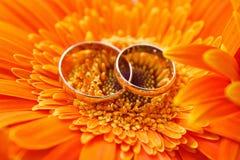 Duas alianças de casamento do ouro em um gerbera alaranjado Imagem de Stock