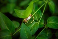 Duas alianças de casamento do ouro penduram no ramo com folhas esmeraldas Fotos de Stock