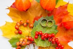 Duas alianças de casamento douradas, folhas coloridas Fundo sazonal criativo do outono Casamento no outono Cores 9 do outono imagens de stock royalty free