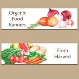 Duas bandeiras coloridas da aquarela com alimento biológico fresco Fotografia de Stock