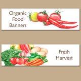 Duas bandeiras coloridas da aquarela com alimento biológico fresco Imagem de Stock