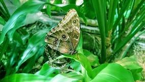Duas borboletas belamente modeladas sentam-se em plantas verde-clara imagens de stock royalty free