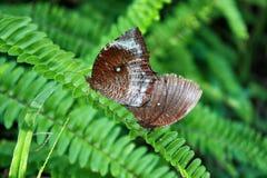 Duas borboletas na lâmina de grama na floresta tropical imagens de stock