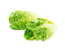 Duas cabeças da salada da alface romana do bebê Fotos de Stock