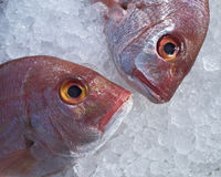 Duas cabeças dos peixes da brema do Mar Vermelho no gelo Imagens de Stock