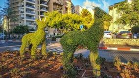 Duas cabras do topiary que levantam na luz do nascer do sol Foto de Stock
