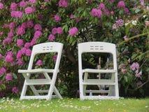 Duas cadeiras e um arbusto lilás Fotografia de Stock
