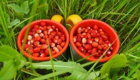 Duas canecas de morangos silvestres Imagens de Stock