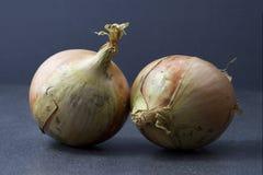 Duas cebolas brancas em um fundo escuro Fotos de Stock Royalty Free