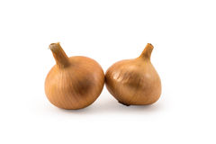 Duas cebolas frescas do ouro isoladas no branco fotos de stock royalty free